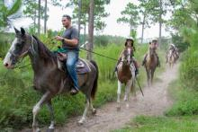 Group riding on horseback through wooded trail