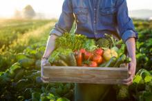 farmer holding assorted vegetables